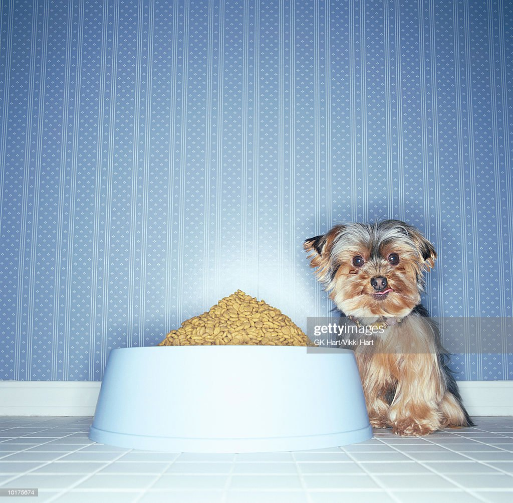 DOG WITH LARGE BOWL OF DOG FOOD