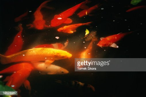 COLORFUL FISH : Stock Photo