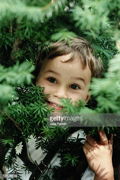 BOY 5 YRS OLD SMILING THROUGH PINE BRANCHES