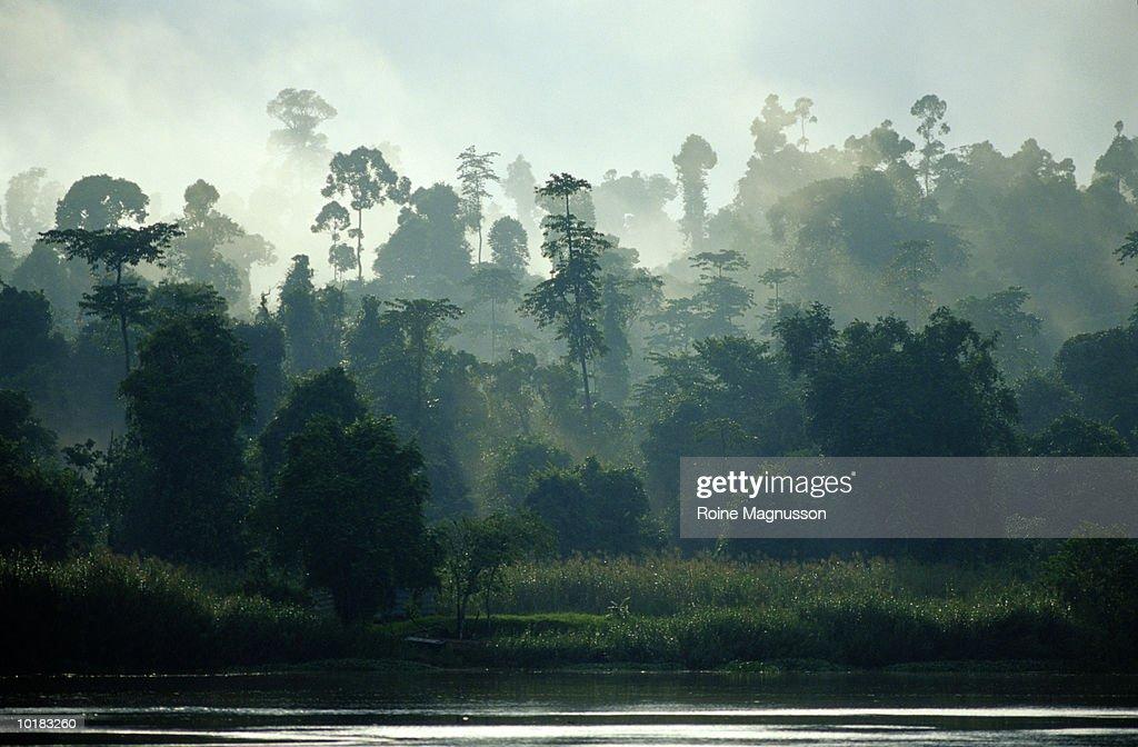 RAINFOREST AND RIVER, BORNEO, MALAYSIA : Stock Photo