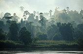 RAINFOREST AND RIVER, BORNEO, MALAYSIA