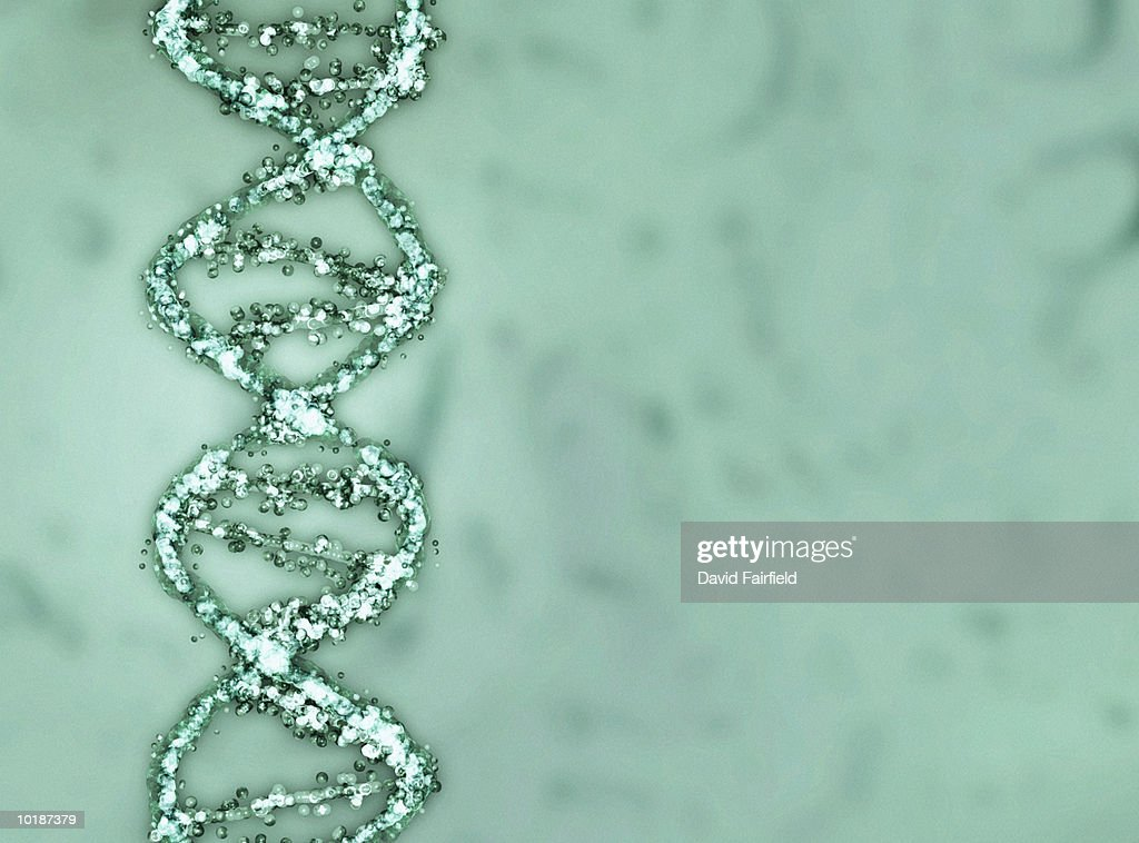 STRANDS OF DNA (DEOXYRIBONUCLEIC ACID) FORMING DOUBLE HELIX : Stock Photo