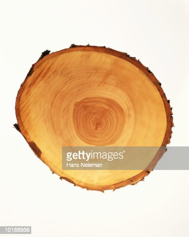 CROSS SECTION OF LOG SHOWING ANNUAL RINGS : Stock Photo