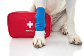 INJURED DOG. CLOSE UP PAW LABRADOR   WITH A BLUE BANDAGE OR ELASTIC BAND ON FOOT AND A EMERGENCY  OR FIRT AID KIT. ISOLATED STUDIO SHOT AGAINST WHITE BACKGROUND.