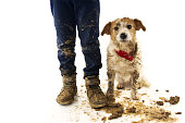 FUNNY DIRTY DOG AND CHILD. JACK RUSSELL DOG AND BOY WEARING BOOTS AFTER PLAY IN A MUD PUDDLE WITH ASHAMED EXPRESSION. ISOLATED STUDIO SHOT AGAINST WHITE BACKGROUND.