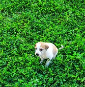 A SMALL PUPPY SITTING ON GRASS AND FEELING AFRAID