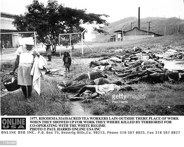 1997 RHODESIA WORKERS AT A TEA ESTATE MASSACRED WHEN THEY SHOWED UP AT WORK FOR COOPERATING AND HELPING THE WHITE REGIME