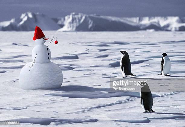A SNOWMAN MEETS THREE PENGUINS
