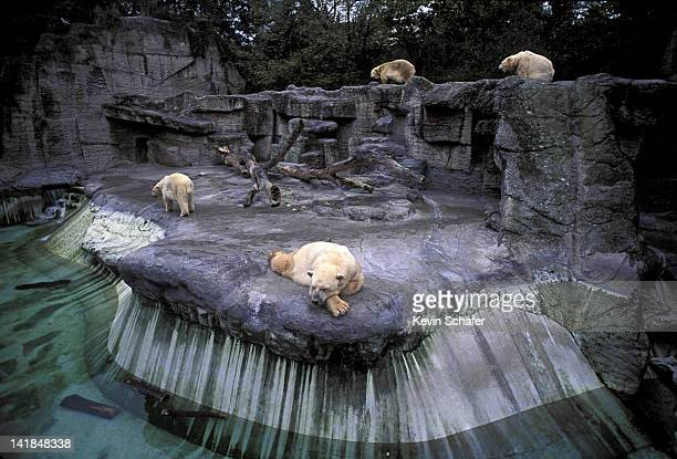 POLAR BEAR EXHIBIT. BASEL ZOO SWITZERLAND. H