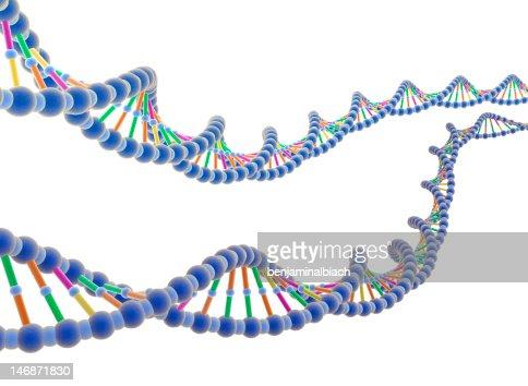 ADN : Stock Photo