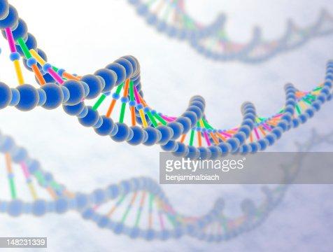 DNA : Stock Photo