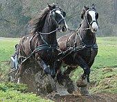 HORSE POWER.