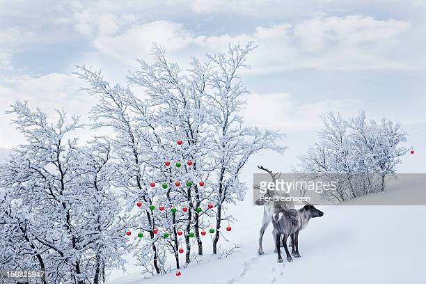 TWO REINDEER IN THE WILDERNESS AND ORNAMENTS