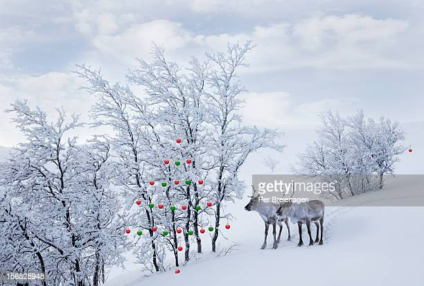 TWO REINDEER LOOKING AT CHRISTMAS ORNAMENTS