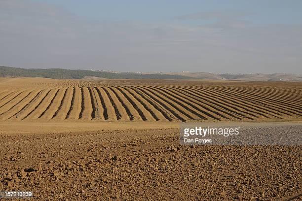 DESERT AGRICULTURE