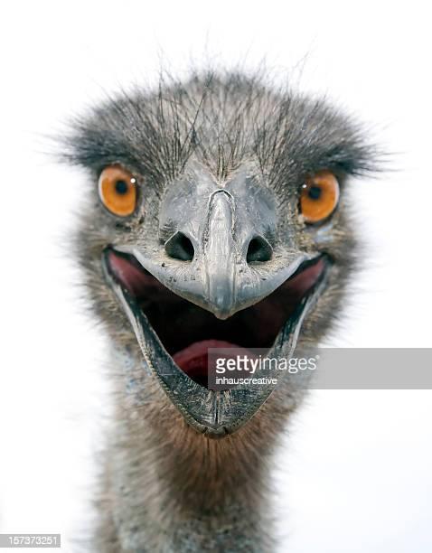 EMU (L)