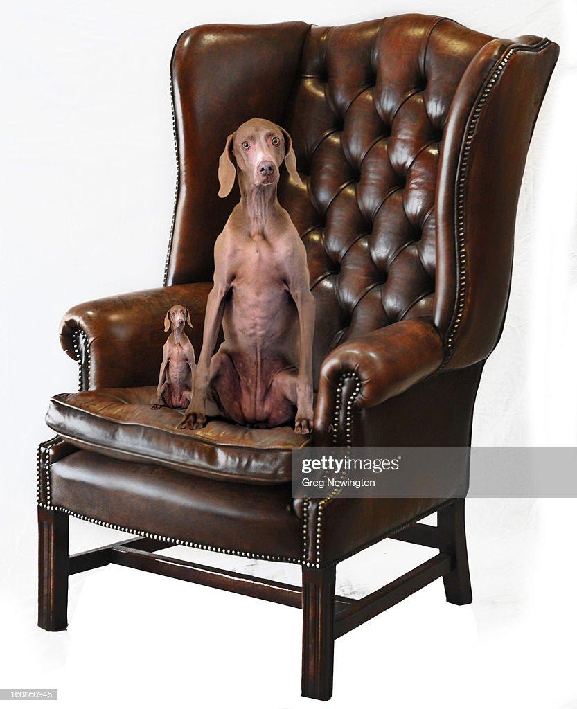 TOP DOG : Stock Photo