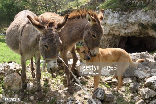 ANIMAL LOVE : Stock Photo
