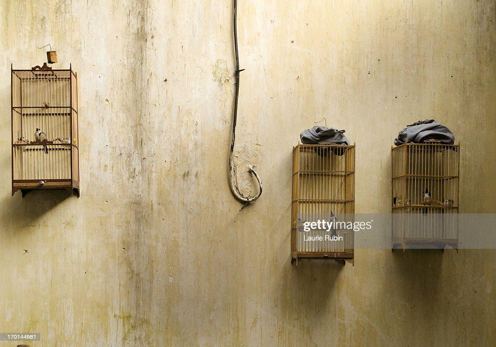 BIRD CAGES  VIETNAM : Stock Photo