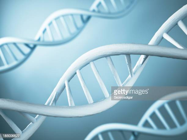 の DNA