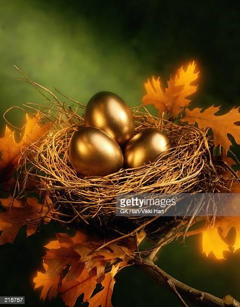 GOLDEN EGGS IN BIRD NEST IN TREE