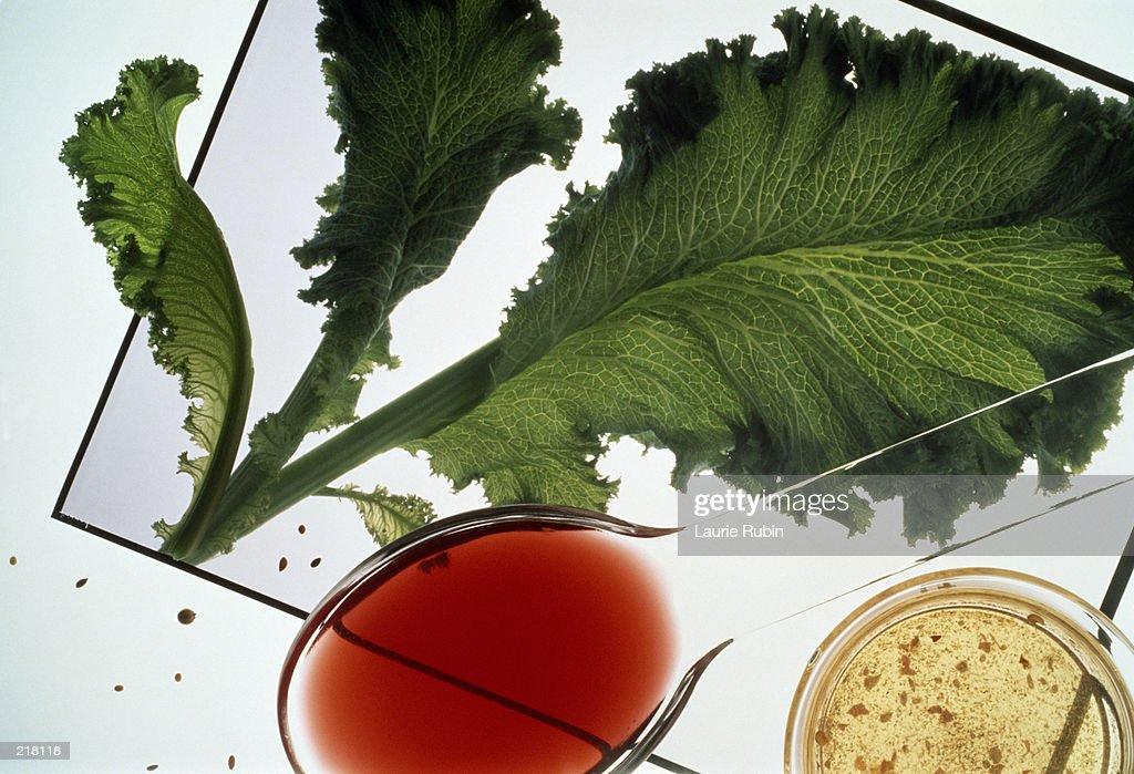 RED WINE VINEGAR & SALAD INGREDIENTS : Stock Photo