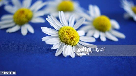 Цветы : Stock Photo