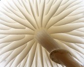 Detail of white porcelain mushroom taken from low angle
