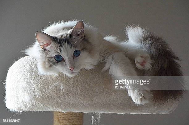 THE CATTHE CAT