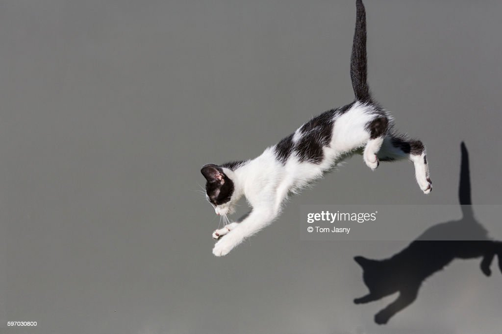 CATS JUMPING : Stock Photo