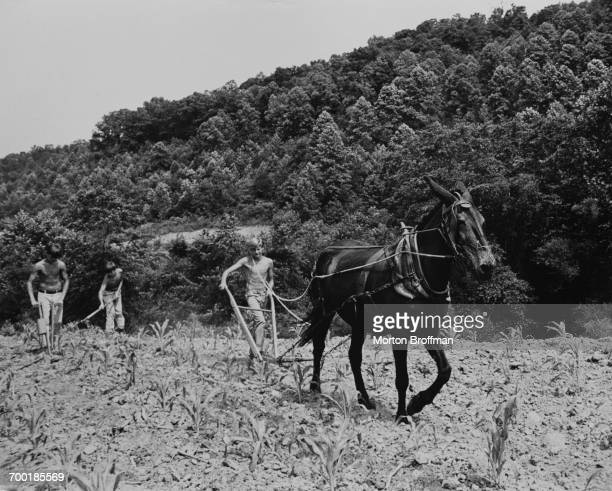 Working the fields Appalachia Poverty Series Kentucky 1969