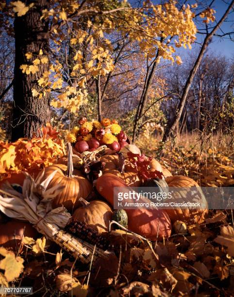 HARVEST STILL LIFE IN WOODS