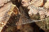 Toile d'araignées entre buches de bois empilés