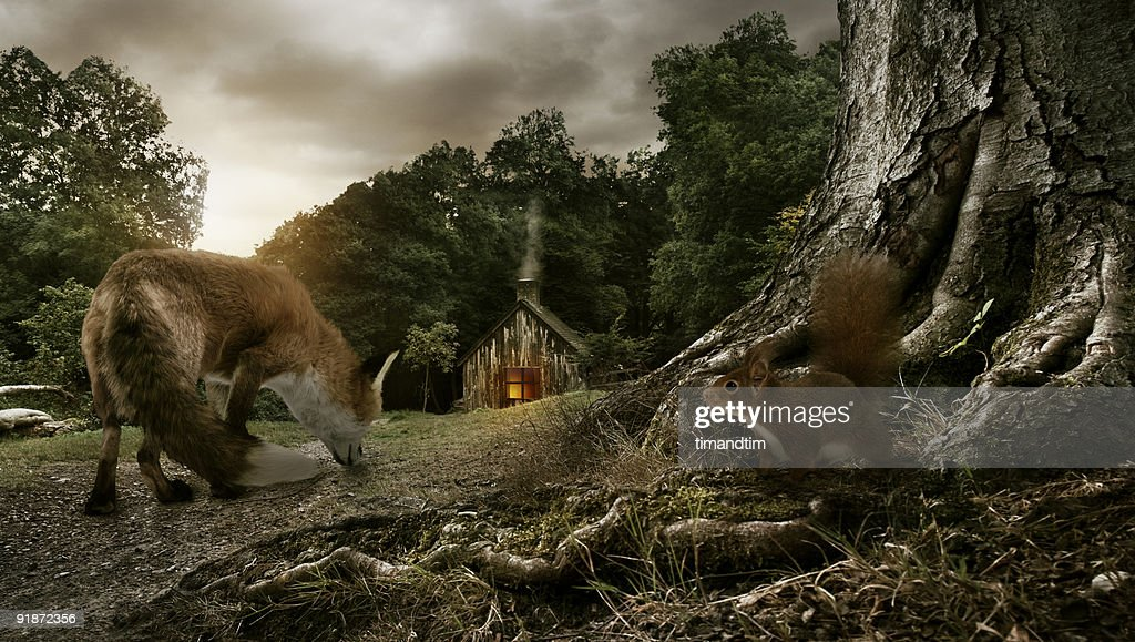 FOX, SQUIRREL & FOREST : Stock Photo