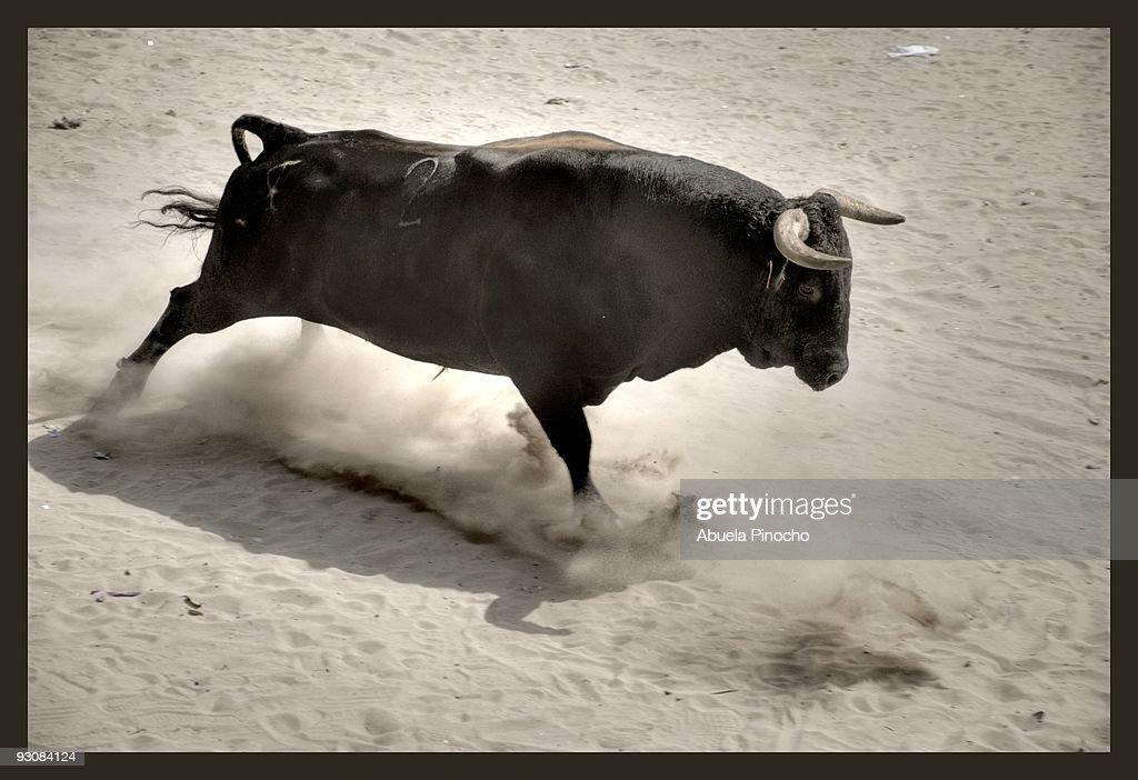 CHARGING BULL : Stock Photo