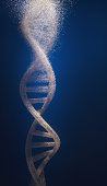DNA , Evolution , Genetic Modification