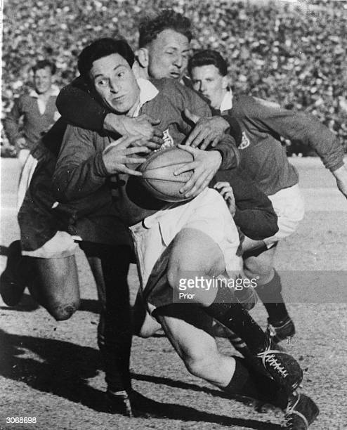 Welsh rugby union flyhalf Cliff Morgan is tackled by Koch whilst playing for the British Lions against South Africa at Johannesburg He was voted...