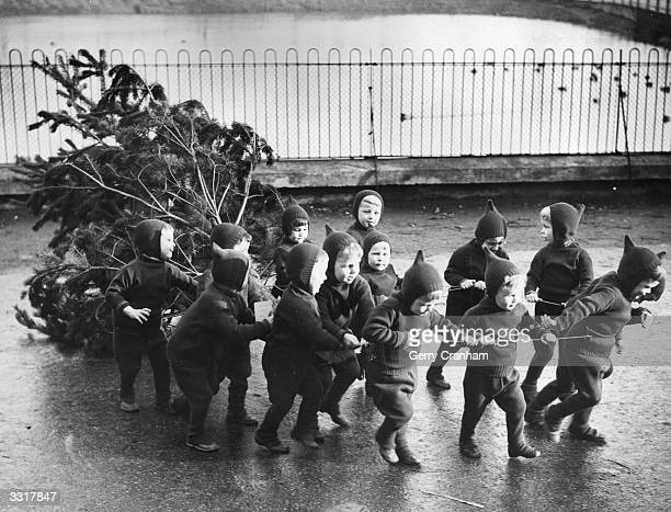 Children from the Homeless Children's Aid and Adoption Society Home at Leytonstone London hauling in their Christmas tree