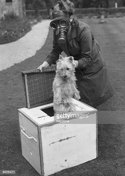 A shelter marshal at the Canine Defence League puts a Scottie dog in a gas box designed by the League for use during a gas attack