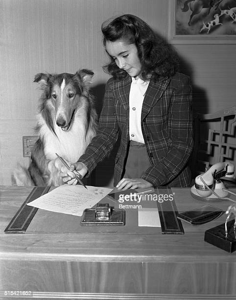 Hollywod CA Lassie the $10 collie runt who became a highpriced star in the movie 'Lassie Come Home' stamps an inky paw on a fiveyear contract with...
