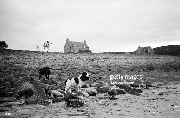Dogs wait to join the inhabitants of the Isle of Soay in the Outer Hebrides who have been evacuated to new homes on the Isle of Mull The dogs will be...