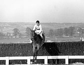The Irish champion steeplechaser 'Arkle' takes the final fence to win the Gold Cup at Cheltenham