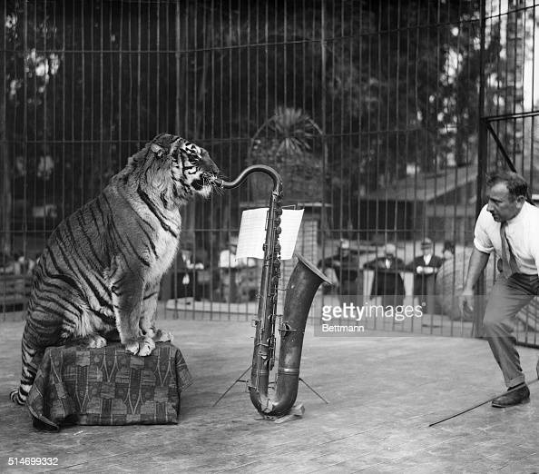 Animal Sax Stock Photos and Pictures   Getty Images