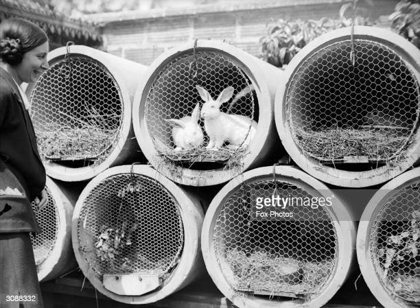 Rabbits in hutches made from large sections of pipe and wire netting