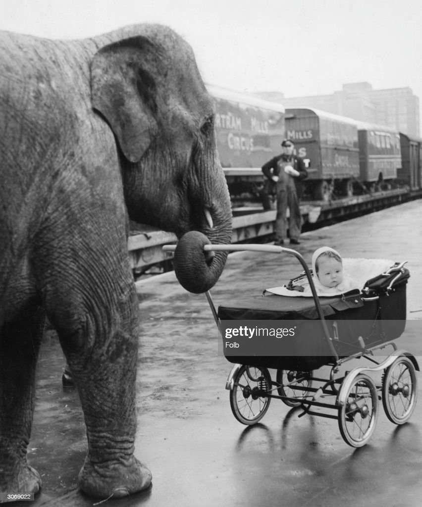 Circus baby Yvonne Kruse is pushed in her pram by 'Kam', one of her mother's charges, on their arrival at Addison Road Station, London, from their winter quarters at Ascot.