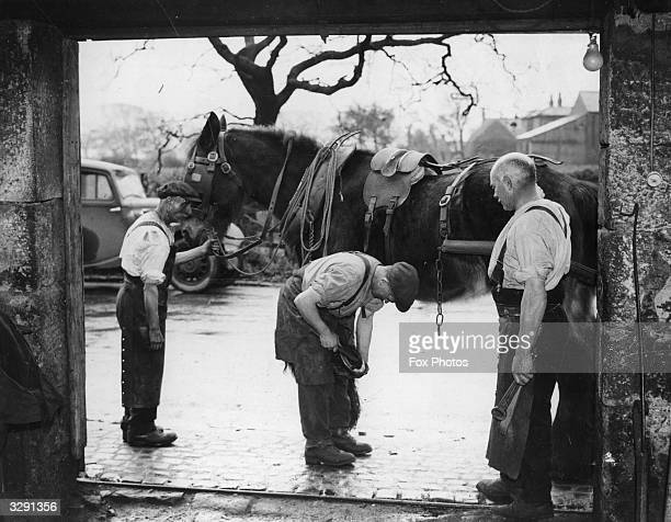 The Nelson family of Leyland Lancashire still operate as the local smithy and are seen here attending to a farmer's horse