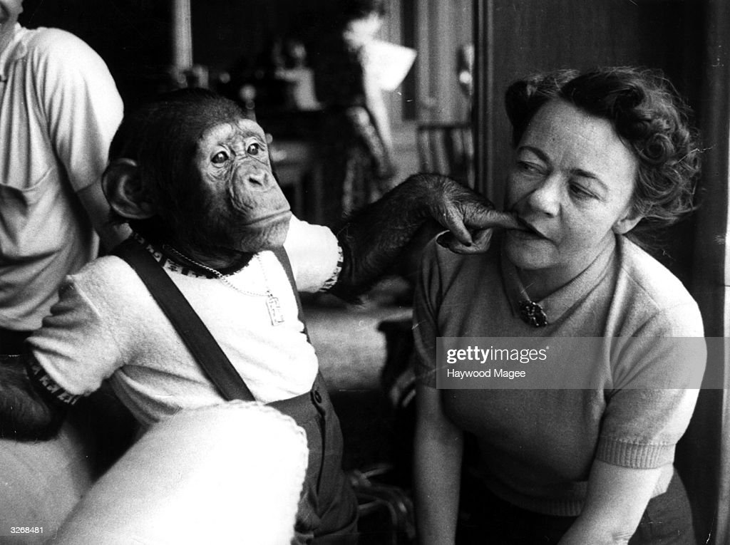 Chimpanzee J Fred Muggs, a television star who commands an audience of eight million viewers in the USA, puts his finger into Hilde Marchant's mouth. Original Publication: Picture Post - 7237 - Appointment With J Fred Muggs - pub. 1954