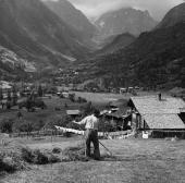 With the rugged beauty of the Alps forming a fitting backdrop the vital hay harvest is gathered in in the Fiesch Valley near the village of Wichel in...
