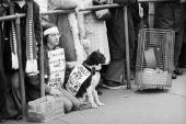 A protestor and her dog wearing placards at a CND rally in London's Trafalgar Square