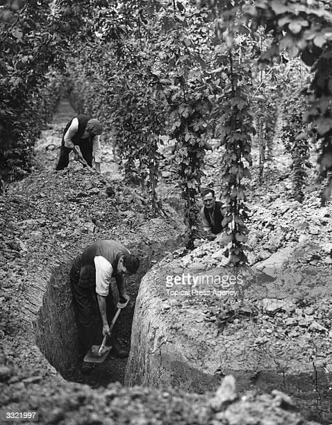 Men digging trenches to be used as air raid shelters during the Second World War These trenches are to protect the owners and workers of gardens in...